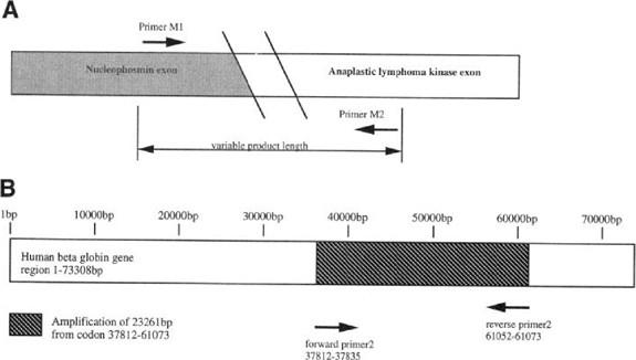 Long Range Pcr Springerlink