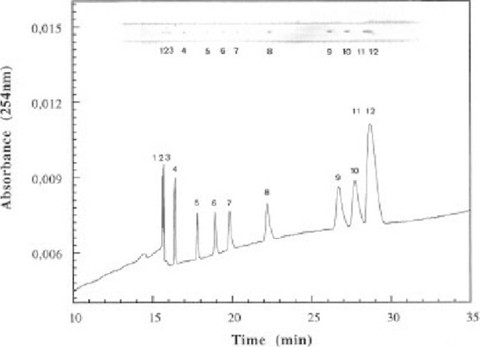 Collection of Capillary Electrophoresis Fractions on a Moving ...