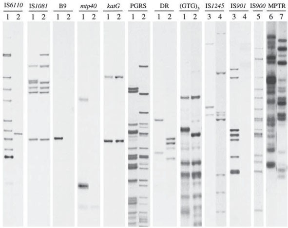 Restriction fragment length polymorphism typing of mycobacteria 273 preparation of plasmid insert for use as a probe fandeluxe Images
