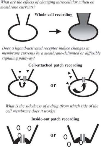 Pipet Perfusion Methods | SpringerLink