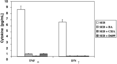 RNase Protection Assay for the Study of the Differential