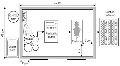 Assessment of Insulin Secretion in the Mouse   SpringerLink