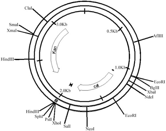 Cell Free Protein Synthesis With Prokaryotic Combined Transcription
