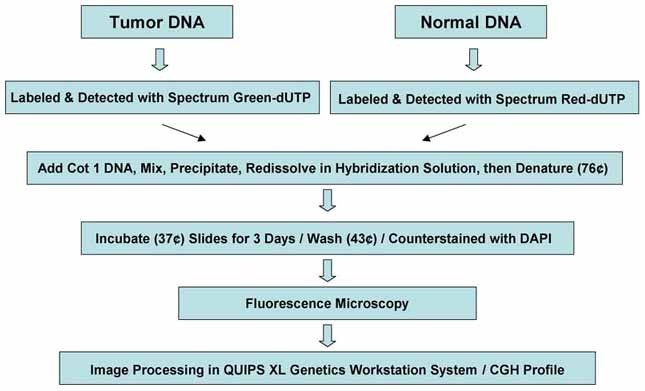 Comparative Genomic Hybridization in Clinical and Medical