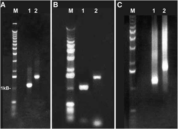 RNA Interference in Caenorhabditis elegans | SpringerLink