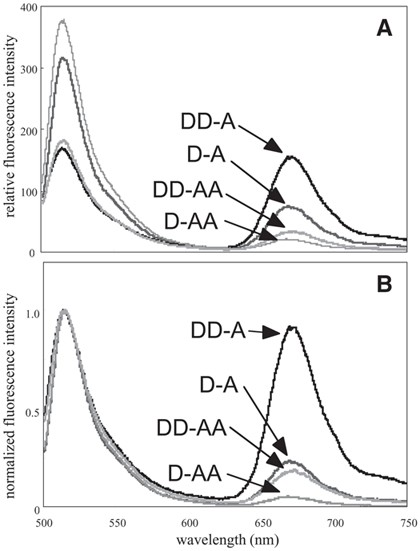 Detecting Rnadna Hybridization Using Double Labeled Donor Probes