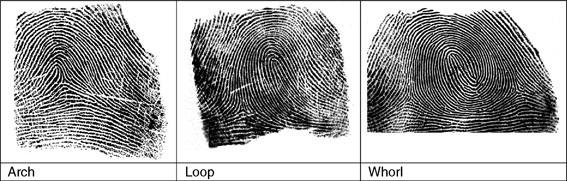 Fingerprint, Forensic Evidence of. Figure 1