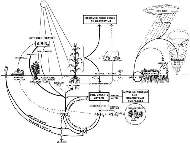 nitrogen cycle springerlink Potassium Cycle Diagram pletes the nitrogen cycle open image in new window figure n8
