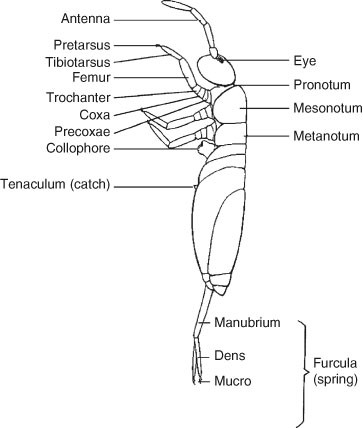 Tenaculum, Figure 24