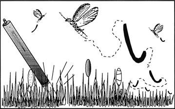 Fireflies Coleoptera Lampyridae Springerlink