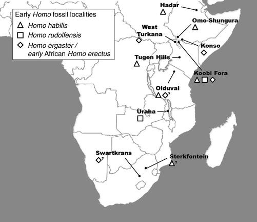 Fossil Records of Early African Homo | SpringerLink