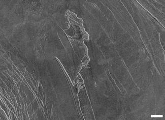 Chaotic Terrain (Venus), Fig. 1