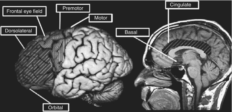 Prefrontal Cortex, Fig. 1