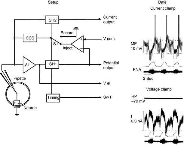 intracellular recording