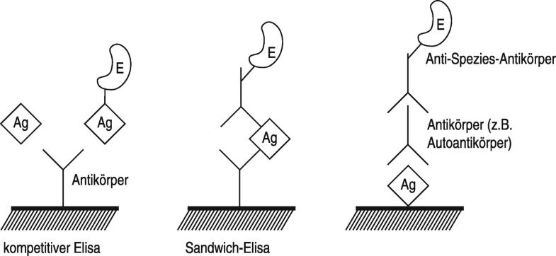 Immunoassay, heterogener, Abb. 1