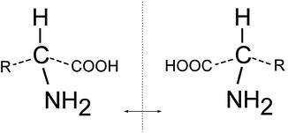 Amino Acid, Figure 1