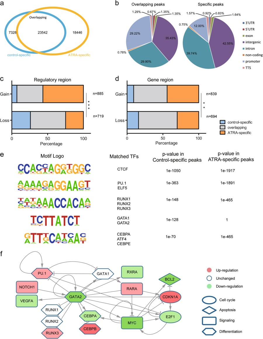 Fig 4 Changes In Chromatin Accessibility Correlated With Gene Cell Diagram Showing A Venn The Atac Seq Peak Overlaps Between Control And Atra Treated Hl 60 Cells B Pie Chart Annotation Of Overlapping