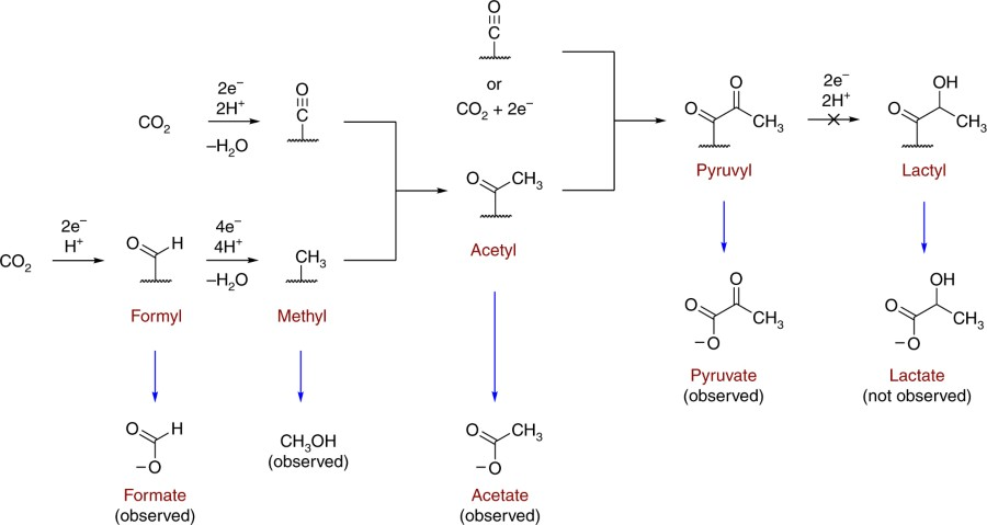 Fig 4 Plausible Mechanism For Carbon Fixation On The Surface Of