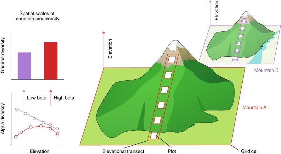 Geological and climatic influences on mountain biodiversity | Nature