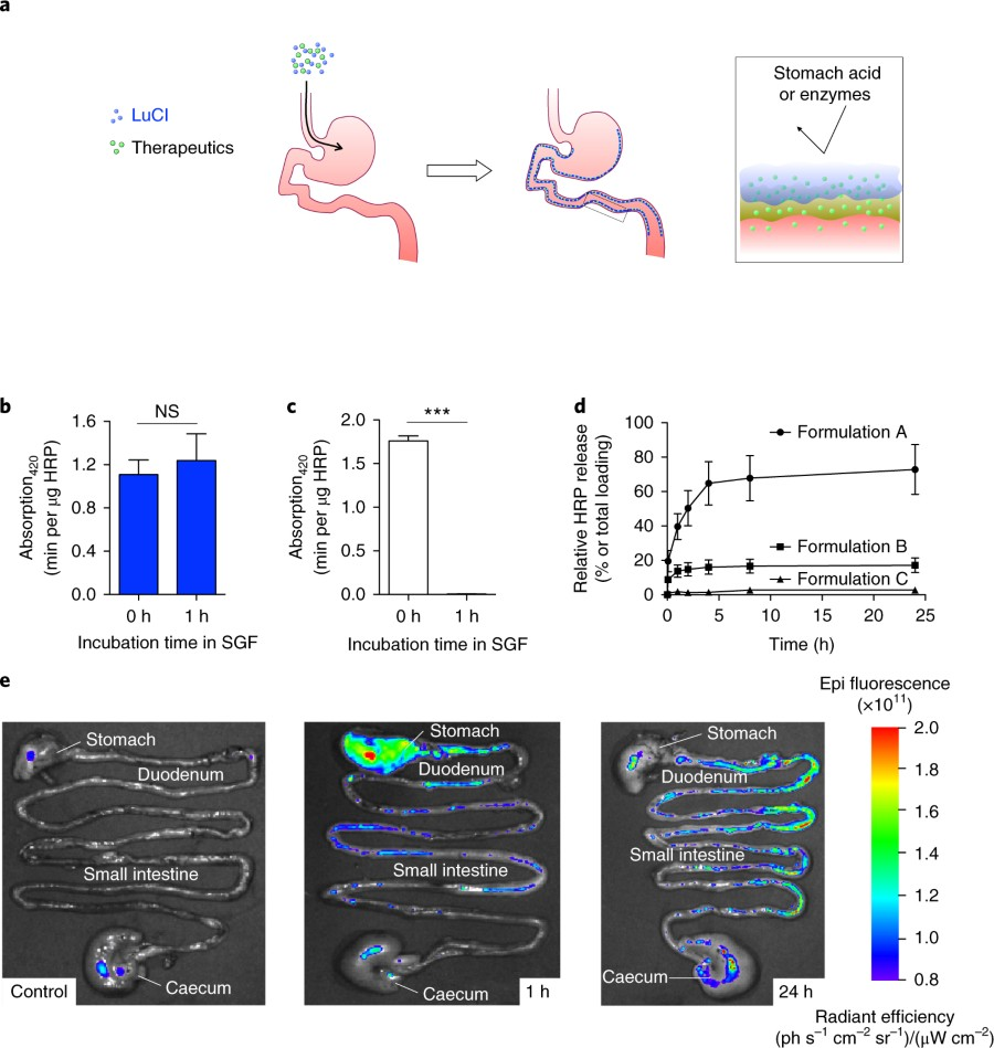 Fig. 6: Delivery of protein using LuCI on the proximal intestine ...
