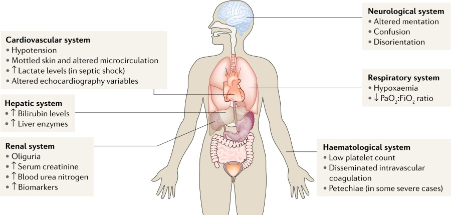 Fig 1 The Major Organ Systems That Are Clinically Monitored In