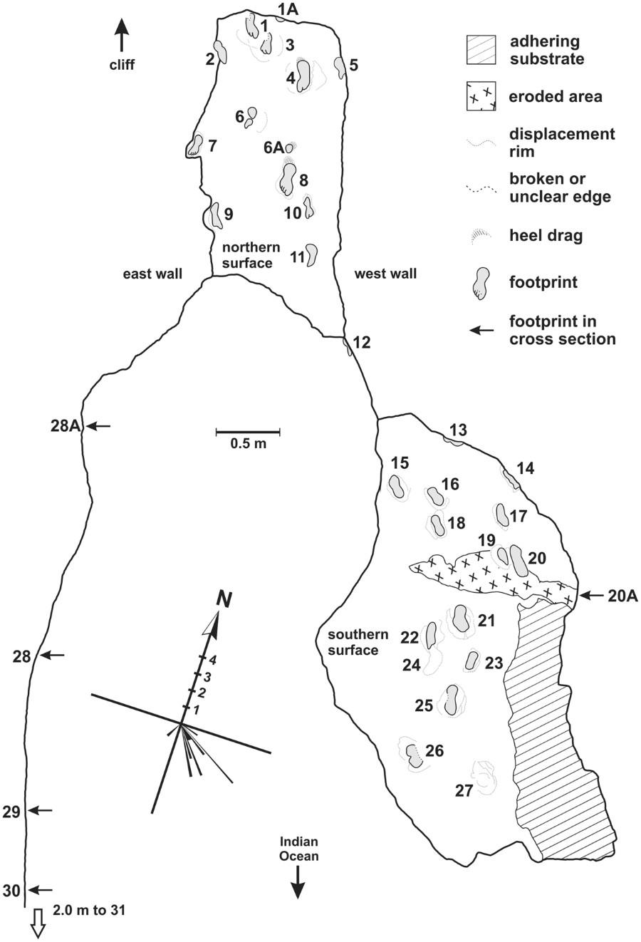 Mapa de distribución de las huellas con diagrama de orientaciones. Costa de Cape South, Sudáfrica.
