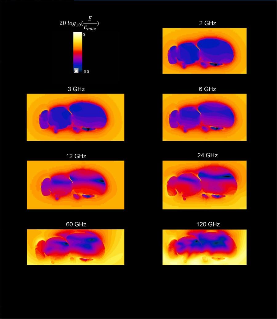 Kuva millimetriaaltojen gigahertsitaajuisen säteilyna absorptiosta mehiläiseen)