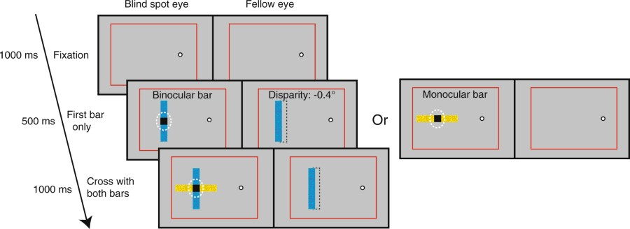 Stimuli for comparing depth perception of filled-in and binocular objects at the blind spot