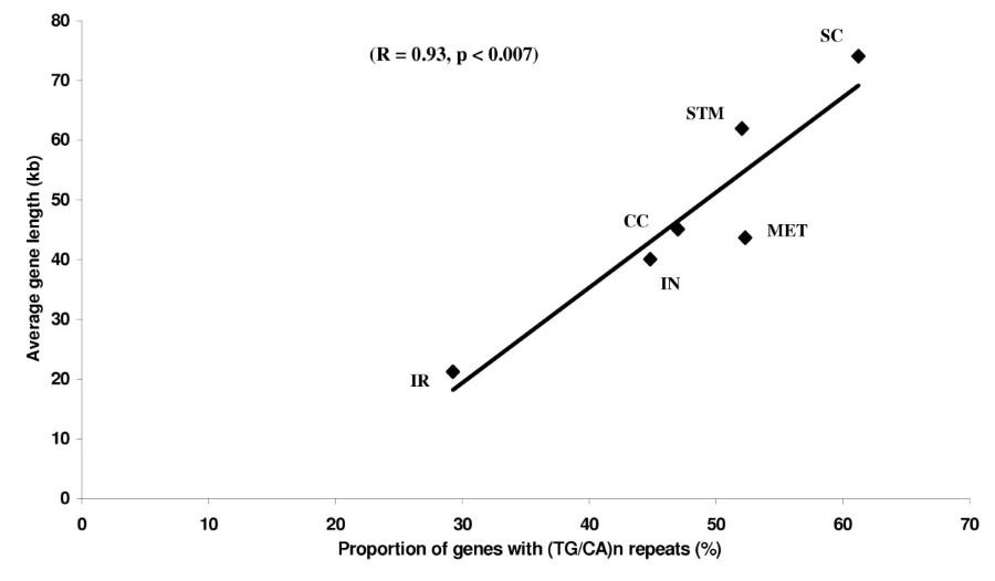 TG/CA) n repeats in human gene families: abundance and