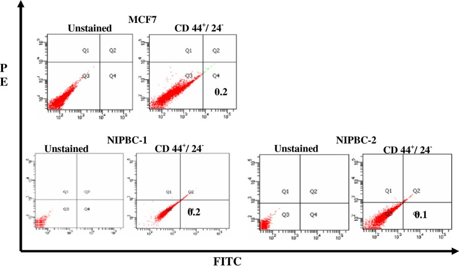 Establishment and characterization of two primary breast