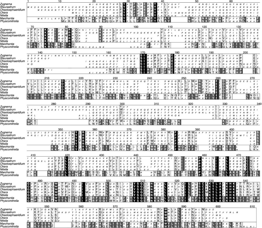 The complete chloroplast DNA sequences of the charophycean