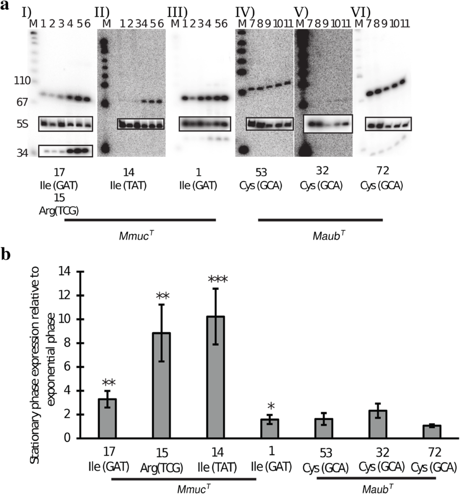 Comparative genomics of Mycobacterium mucogenicum and