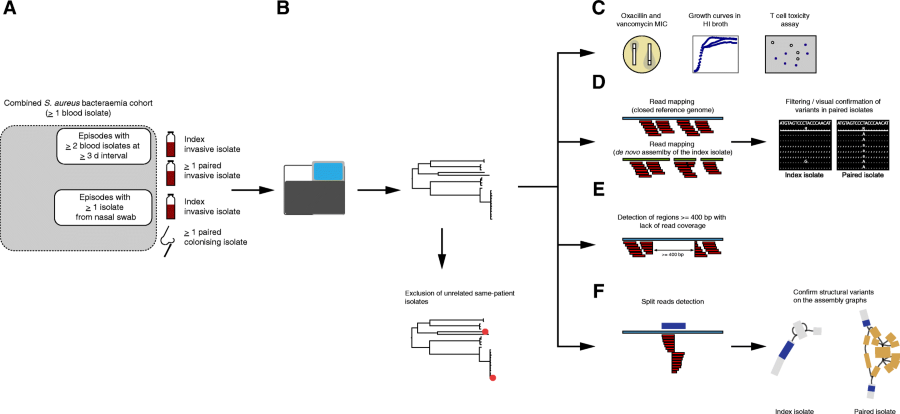 Genomic exploration of sequential clinical isolates reveals a