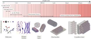 Hierarchically oriented organization in supramolecular peptide crystals
