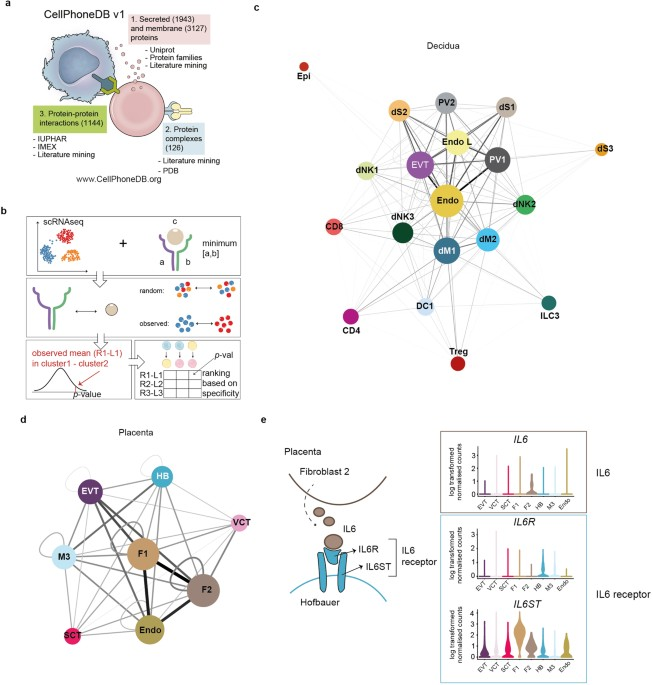 Single-cell reconstruction of the early maternal–fetal interface in