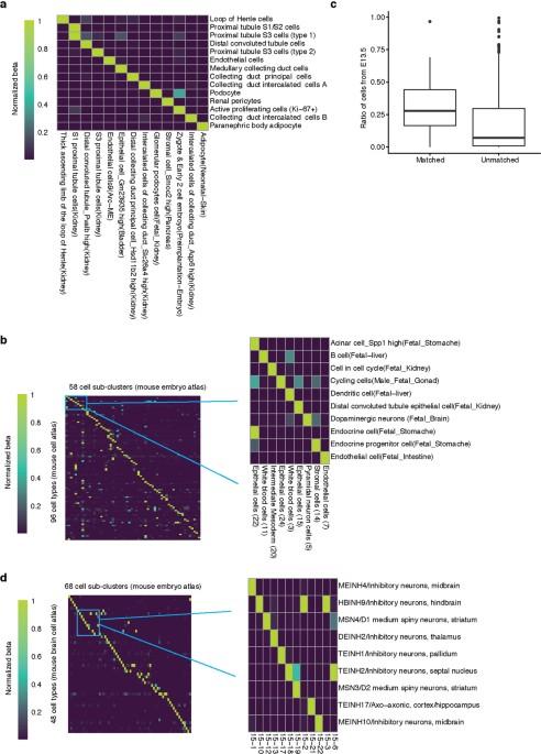 The single-cell transcriptional landscape of mammalian