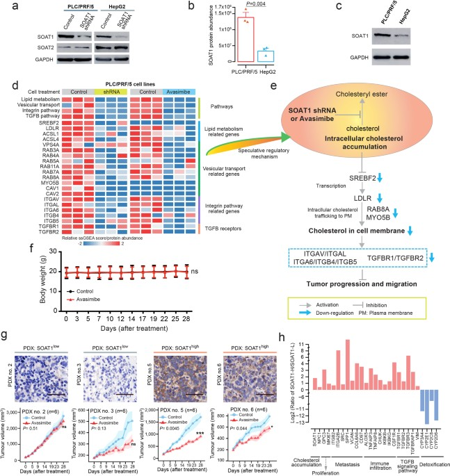 Proteomics identifies new therapeutic targets of early-stage