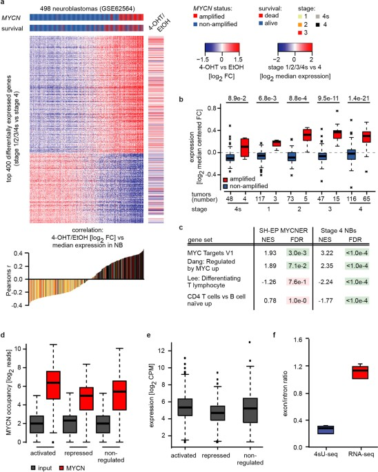 Recruitment of BRCA1 limits MYCN-driven accumulation of