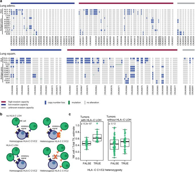 Neoantigen-directed immune escape in lung cancer evolution | Nature