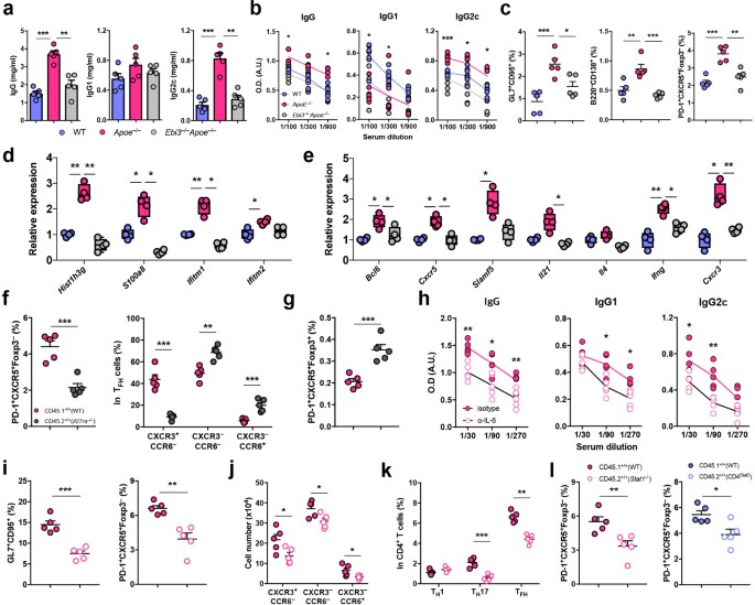 atherogenic dyslipidemia promotes autoimmune follicular helper t cell responses via il 27 nature immunology
