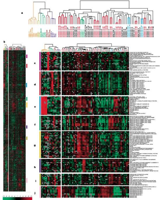 Molecular portraits of human breast tumours   Nature