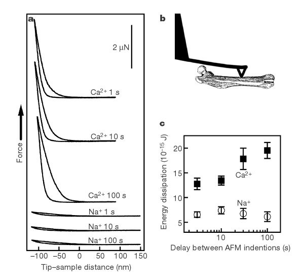 bone indentation recovery time correlates with bond reforming time