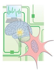 Biological computation: Amazing algorithms