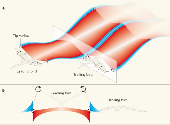 bird flight diagram fly with a little flap from your friends nature  fly with a little flap from your