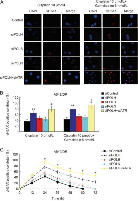 co inhibition of pol η and atr sensitizes cisplatin resistant non