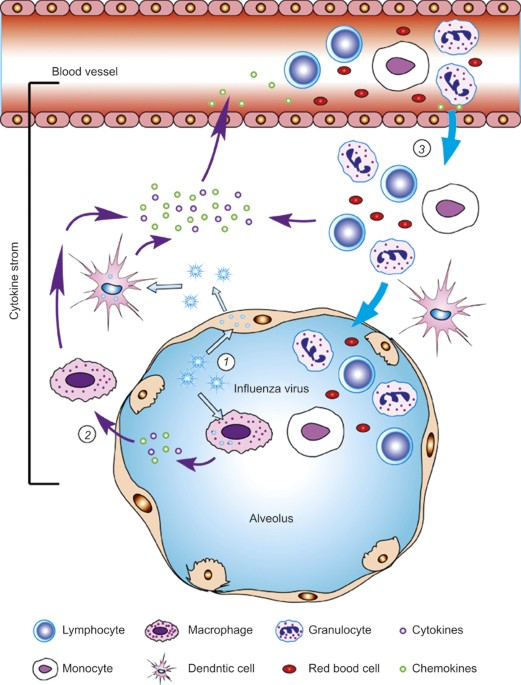 The Cytokine Storm Of Severe Influenza And Development Of