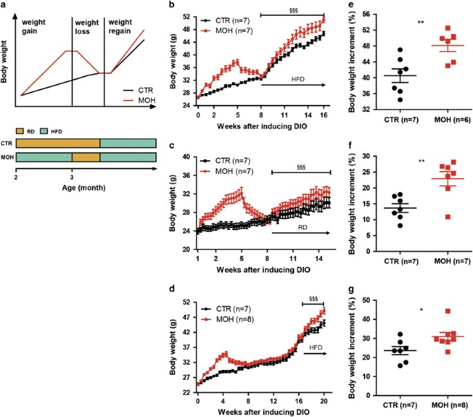 046118bbbeb41 Weight gain-loss-regain model and long-term obesity memory. The DIO model in  C57BL 6J mice was established as per the simulative graph and timeline (a).