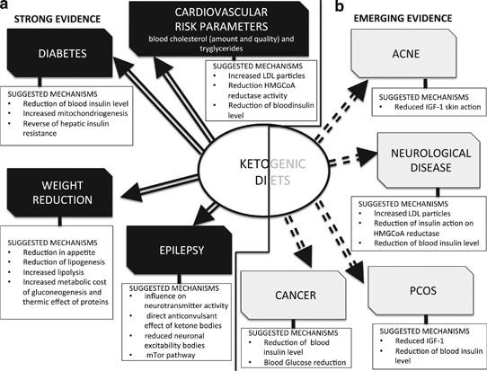 is ketogenic diet safe for high cholesterol pubmed