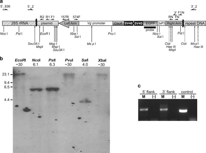 heteromorphic sex chromosome definition biology in Guelph