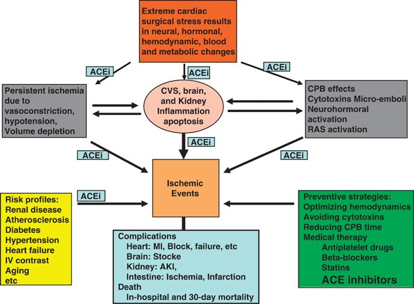 Ace Inhibitors In Cardiac Surgery Current Studies And Controversies Hypertension Research